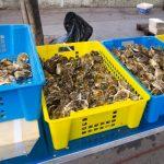 広島の牡蠣はいつから?スーパーで買うならどこがおすすめ?