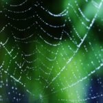 蜘蛛の巣が子供の洗濯ものに付いて害はない?巣を張らせない方法は?