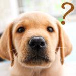 ホウ酸団子犬がいる場合の置き方や置き場所はどうする?