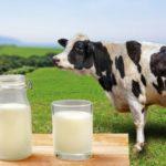 牛乳の賞味期限切れは過熱でOK?何日までOK?他への使い道をご紹介